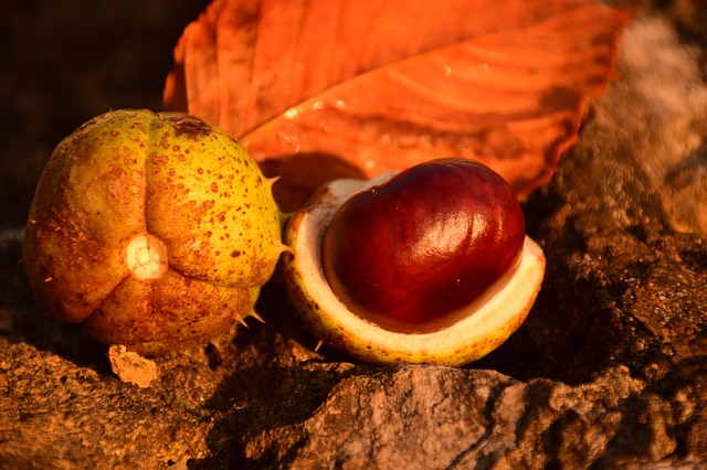 (c)pixabay ulleo chestnut